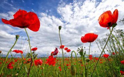 The Symbol of Memorial Day
